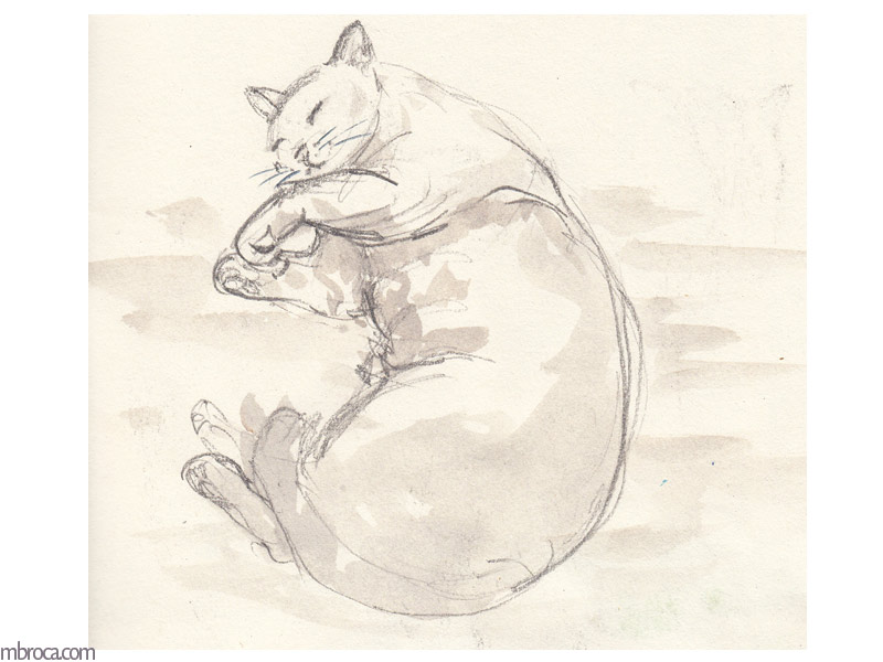 Chat endormi, recrquevillé, crayon et aquarelle.