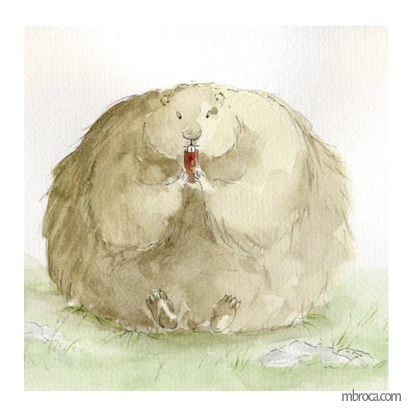 marmotte obèse qui mange une carotte.