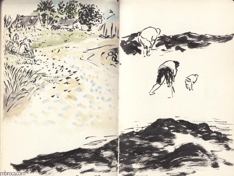 TRois personnes ramassent des coquillages, les jambes dans l'eau.