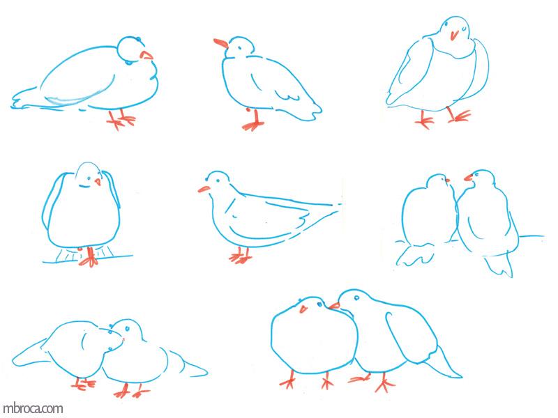 dessins; Onze pigeons bleus et oranges.