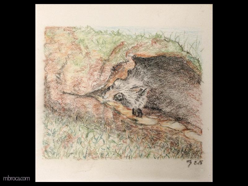 un raton-laveur se cache dans un tronc d'arbre creux. On ne voit que sa tête et une patte.