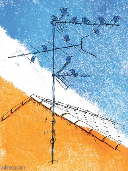 des oiseaux sur une antenne. Le toit d'une maison
