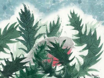 un rouge gorge dans les branches d'un sapin rasssemblées comme un nid