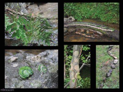 Projet pédagogique. Quatre photographies d'oeuvres avec des feuilles, de l'eau, des cailloux, de la terre, des bouts de bois.