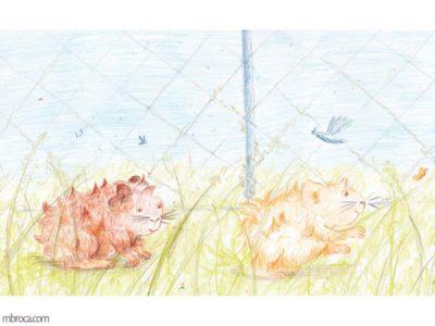Publications, rouzig. Deux cobayes courent dans l'herbe dans une cage.