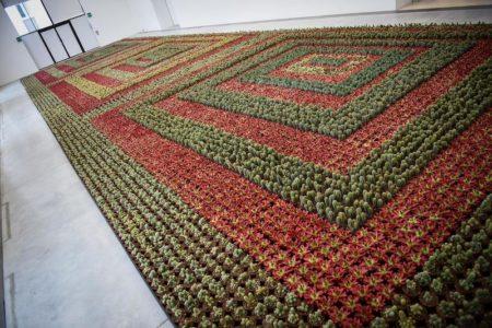 5 expositions 2018, des milliers de cactus verts et rouges qui forment un parterre.