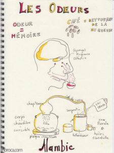 Les odeurs et le fonctionement d'un alambic, sous forme de sketchnoting.
