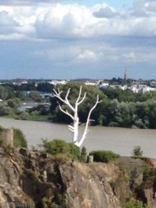 Le voyage à Nantes : un arbre peint en blanc