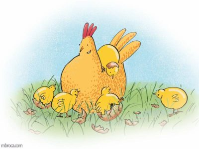 une poule et des poussins